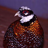 Aves de lujo Imágenes de archivo libres de regalías