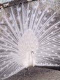 Aves de lujo Foto de archivo