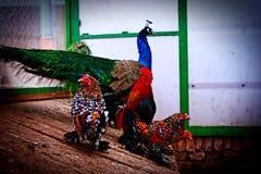 Aves de lujo Fotografía de archivo