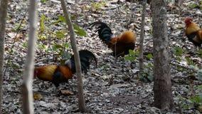 Aves de selva almacen de metraje de vídeo