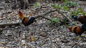 Aves de selva almacen de video
