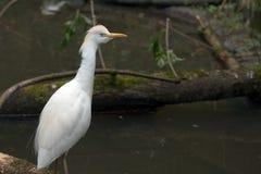 Aves del agua fotografía de archivo
