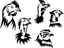 Aves domésticas Fotografia de Stock Royalty Free