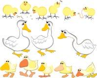 Aves domésticas novas ilustração royalty free