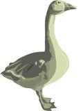 Aves domésticas o ganso cinzento Fotografia de Stock Royalty Free