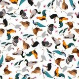 Aves domésticas sem emenda lisas do teste padrão Fotos de Stock