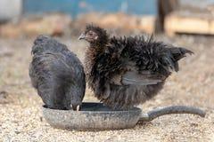 Aves dos y cacerola vieja en la yarda fotos de archivo libres de regalías