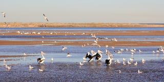 Aves marinas en el lago costero fotos de archivo