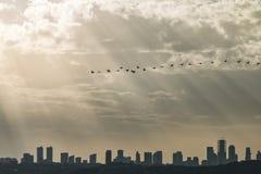 Aves migratorias imagen de archivo