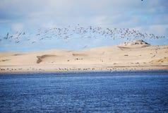 Aves migratorias Imágenes de archivo libres de regalías