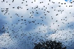 Aves migratorias en el otoño Fotos de archivo