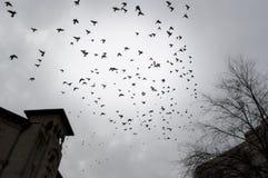 Aves migratorias en la ciudad Imagen de archivo libre de regalías