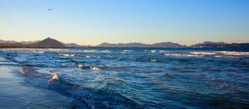Aves no litoral Imagens de Stock