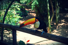 Aves Parque das, Бразилия Стоковые Фото