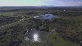Aves silvestres en laguna verde stock footage
