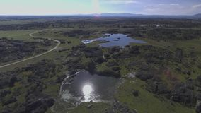 Aves silvestres EN laguna verde φιλμ μικρού μήκους