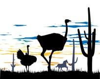 Avestruces y caballo salvaje en los cactus de la pizca de la estepa Fotografía de archivo