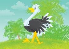 Avestruz libre illustration
