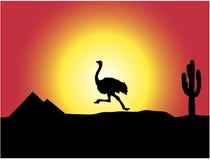 Avestruz Foto de Stock
