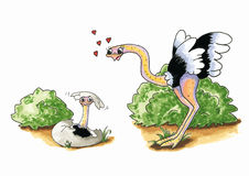 Avestruz con los jóvenes ilustración del vector