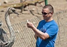 Avestruz de alimentação do homem Fotos de Stock Royalty Free