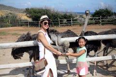 Avestruz de alimentación de la gente en la granja de la avestruz de Aruba Fotografía de archivo libre de regalías