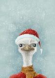 Avestruz de la Navidad en la nieve Imágenes de archivo libres de regalías