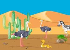 Avestruz e outros animais no deserto Imagens de Stock