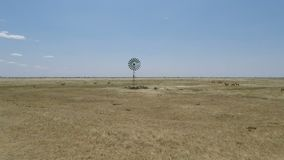 Avestruz en Kenia almacen de video