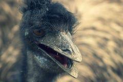 A avestruz m? grande no prado imagens de stock royalty free