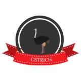 Avestruz plana del icono con el nombre Fotografía de archivo libre de regalías