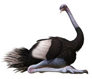 Avestruz que se sienta ilustración del vector