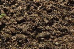 Avföring av den östliga svarta noshörningen Arkivbild