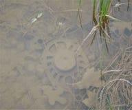Avfall i vatten bredvid en väg royaltyfri fotografi