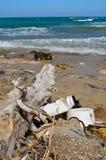 Avfalls ackumulerar på stranden royaltyfri fotografi