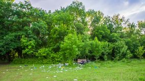 Avfalls spridda på grönt gräs i skog lager videofilmer