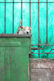 Avfallscontainerhund Arkivbilder