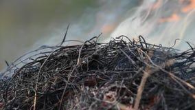 Avfyra brinnande torrt gräs det fara för miljö stock video