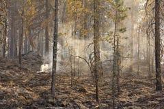 Avfyra i skogen, brända träd, rök arkivfoto