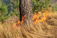 Avfyra i skogen i den varma sommaren arkivfoto