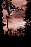 Avfyra i skyen Royaltyfria Foton