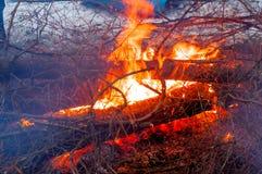 Avfyra i vinterträna Royaltyfri Bild