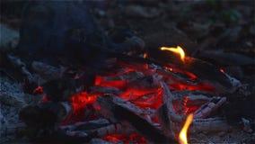 Avfyra och glöd på skoggolvet i lägret arkivfilmer