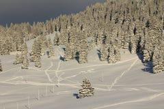 Avfyra trees och snow Royaltyfri Fotografi