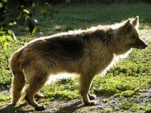avgådd hundguard Royaltyfri Bild