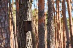 Aviário da madeira no tronco de árvore no dia ensolarado da floresta fotos de stock royalty free