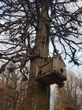 Aviário de madeira, em uma árvore no outono, ao estilo da casa Amsterdão, em Rússia na propriedade Kuskovo imagens de stock