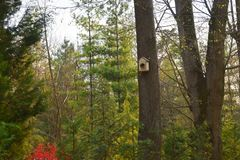 Aviário feito a mão em uma árvore em Forest Park, abrigo de madeira da mão para que os pássaros passem o inverno imagem de stock royalty free