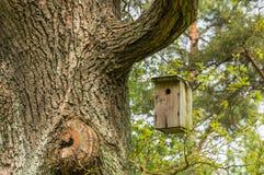 Aviário para pássaros na árvore Fotos de Stock