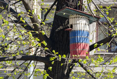 Aviário, um alimentador do pássaro na árvore Imagem de Stock Royalty Free
